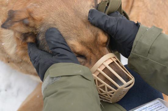 За выгул опасных собак без намордника планируют штрафовать