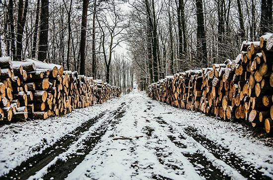 Чёрным лесорубам станет сложнее сбыть древесину