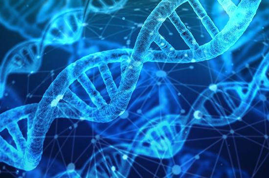 Сколько лет потребовалось на расшифровку ДНК