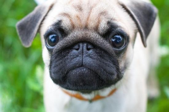 Проект о запрете изъятия домашних животных за долги направили в кабмин
