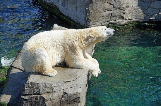 Минприроды пересчитает белых медведей на территории России