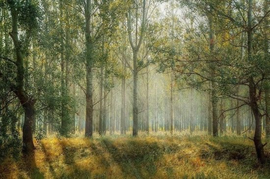 Правила проведения аукционов на аренду лесных участков предложили уточнить