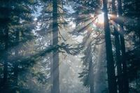 РАН попыталась подыскать российскому лесу хозяина