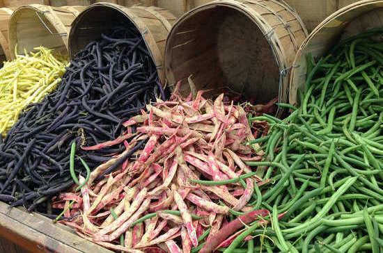 Регионам помогут выращивать бобовые культуры
