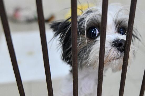 В Госдуме предложили выделить из бюджета средства на приюты для животных