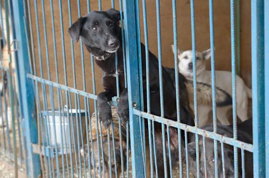 Минприроды одобрило идею о госфинансировании приютов для животных