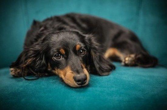 Эксперт предложил выделять места для захоронения домашних животных