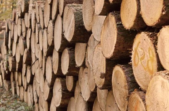 Архангельские депутаты внесли проект о контроле региональных властей за оборотом древесины