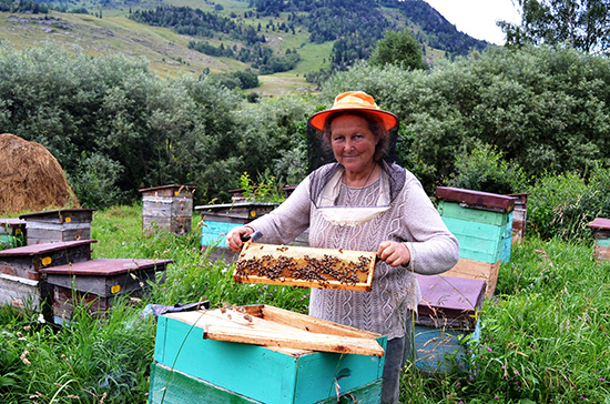 Пчёлы в Татарстане получат паспорта