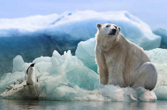 Сколько морских медведей осталось на планете