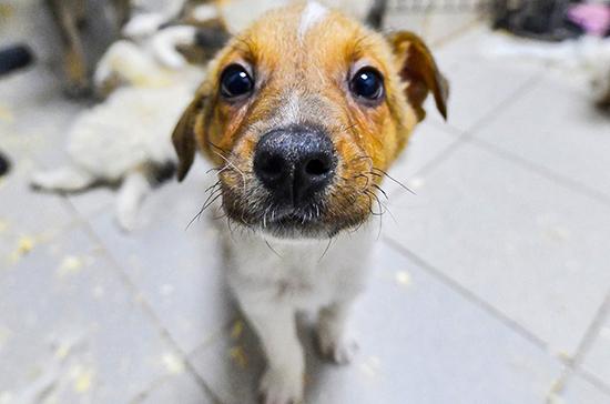 Ветеринар рассказала, как уберечь собаку от отравления