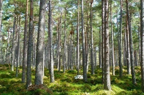 В Комитете Совфеда по природопользованию предложили расширять систему «зелёных облигаций»