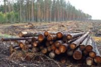 Счётная палата сообщила об ущербе от незаконной вырубки лесов