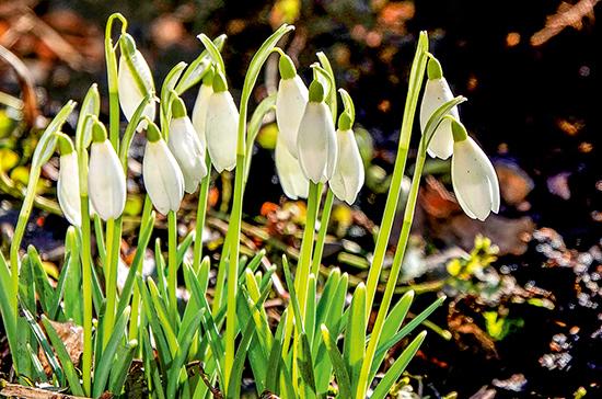 Весна придет в Россию раньше времени