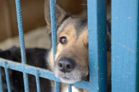 Минприроды одобрило идею о федеральном проекте по созданию приютов для животных