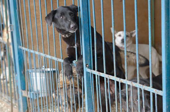 Федеральный проект по строительству приютов для животных надо сделать максимально конкретным, считает депутат