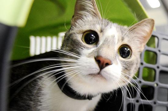 Эксперт объяснил, почему россияне предпочитают кошек другим домашним животным