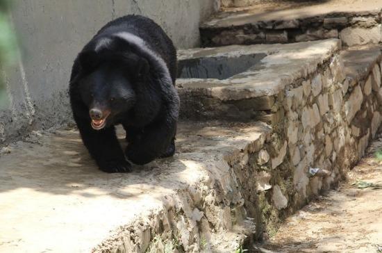 В приморский Центр реабилитации диких животных поступили гималайские медведи