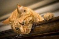 Китайские учёные рассказали о восприимчивости кошек к коронавирусу