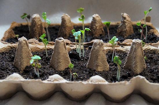 Садовод рассказала, как подготовить почву для рассады весной