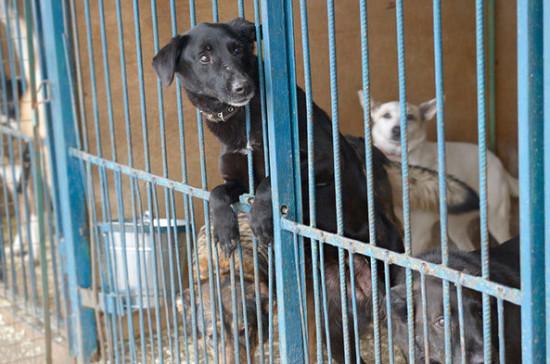 Бурматов призвал кабмин разрешить волонтёрам работать в приютах для животных в период пандемии