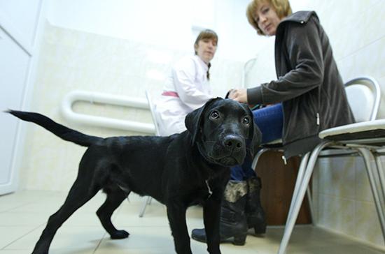 Россельхознадзор получит новые полномочия по ветеринарным лекарствам