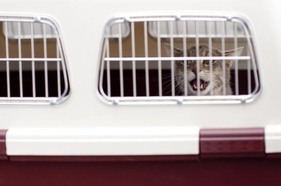 «Шереметьево» пересмотрит нормы обработки багажа из-за гибели двух кошек