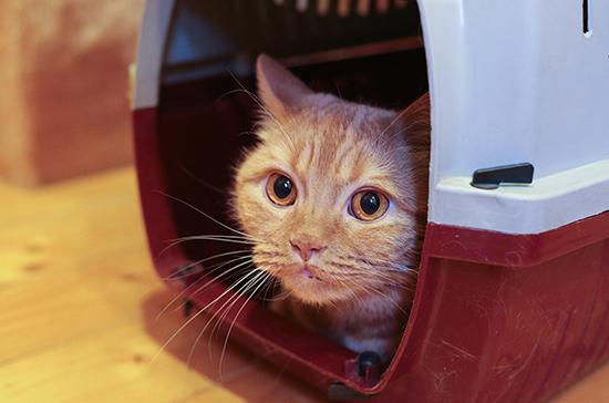 Дрессировщик рассказал о течении коронавируса у домашних животных