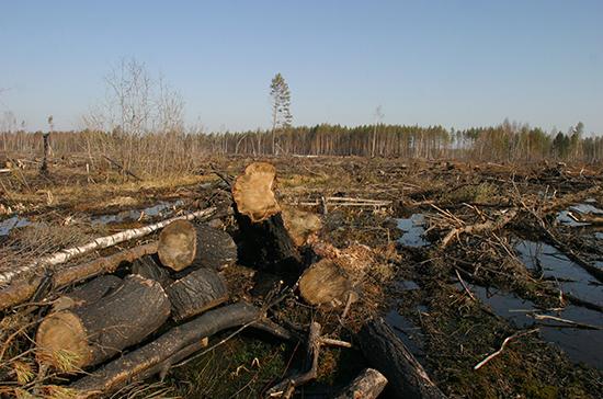 В Госдуме планируют разработать меры поддержки лесной промышленности и аквакультуры