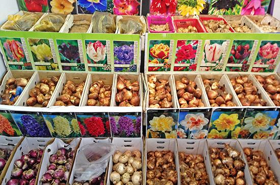 Сенатор призвал возобновить работу садовых рынков