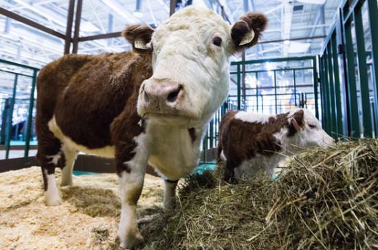 В Югре начали чипировать скот