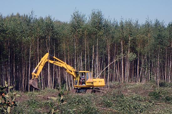 Правительство предлагает изменить правила строительства в лесах
