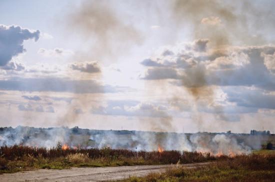 Сенатор предложила решать проблему поджога травы поправками в Лесной и Земельный кодексы