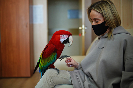 Зоопарки и цирки включили в перечень организаций, пострадавших от пандемии COVID-19