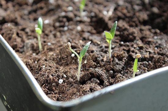 Дачникам разрешили не согласовывать с властями посев импортных семян