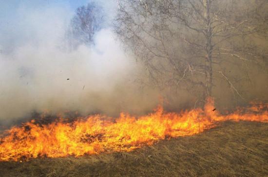В Приангарье чиновников заподозрили в поджоге леса