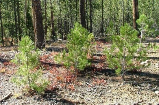 В Краснодарском крае продлили запрет на посещение лесов