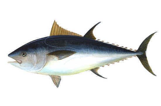 Мир отмечает День тунца