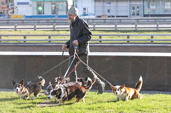 Как правильно выгуливать собак в Москве