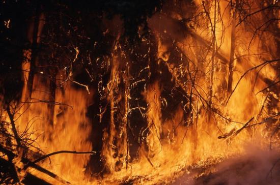 Фонд дикой природы предупредил о серьёзных последствиях лесных пожаров в России в 2020 году