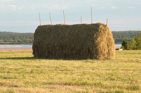 Фермерские хозяйства из засушливых регионов могут получить господдержку