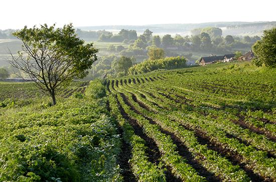 Владельцев сельхозугодий могут обязать заниматься повышением плодородия почвы