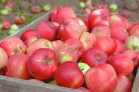 В Совфеде предлагают разработать спецпрограмму страхования урожая