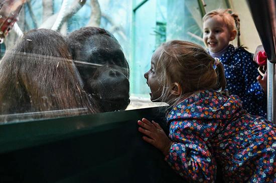 В России открылся первый зоопарк в условиях пандемии