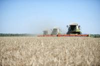 Экспортёрам сельхозпродукции смягчили требования по льготным кредитам