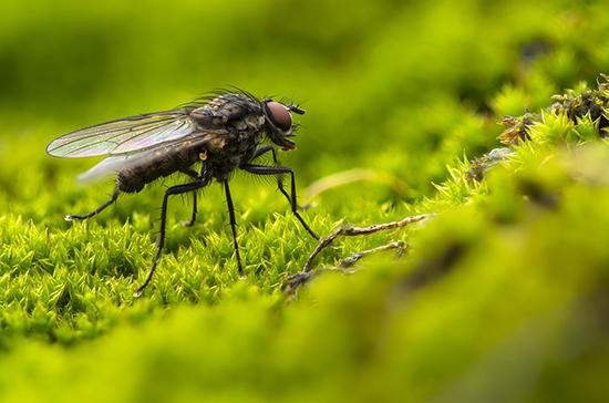 Биолог рассказал об опасности комнатных мух