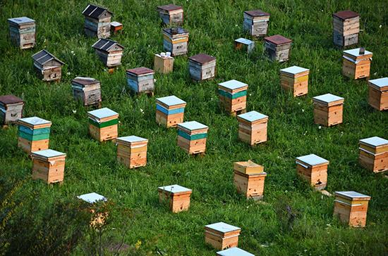 Этим летом на Алтае ожидают большой урожай мёда