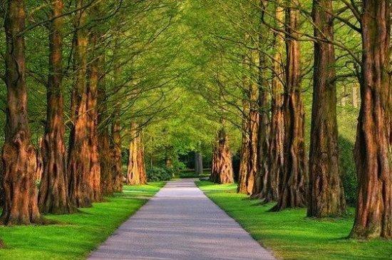 Эксперты предупредили об опасности прогулок по паркам и лесам