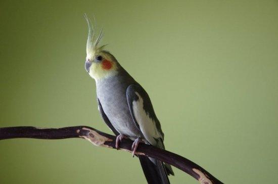 СМИ сообщили о «птицепаде» в Австралии