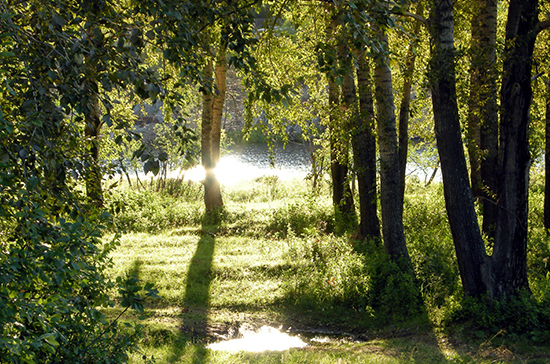 Национальные парки России могут открыть для посещения в конце июня